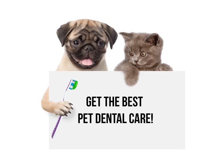 dog-cat-dental-care